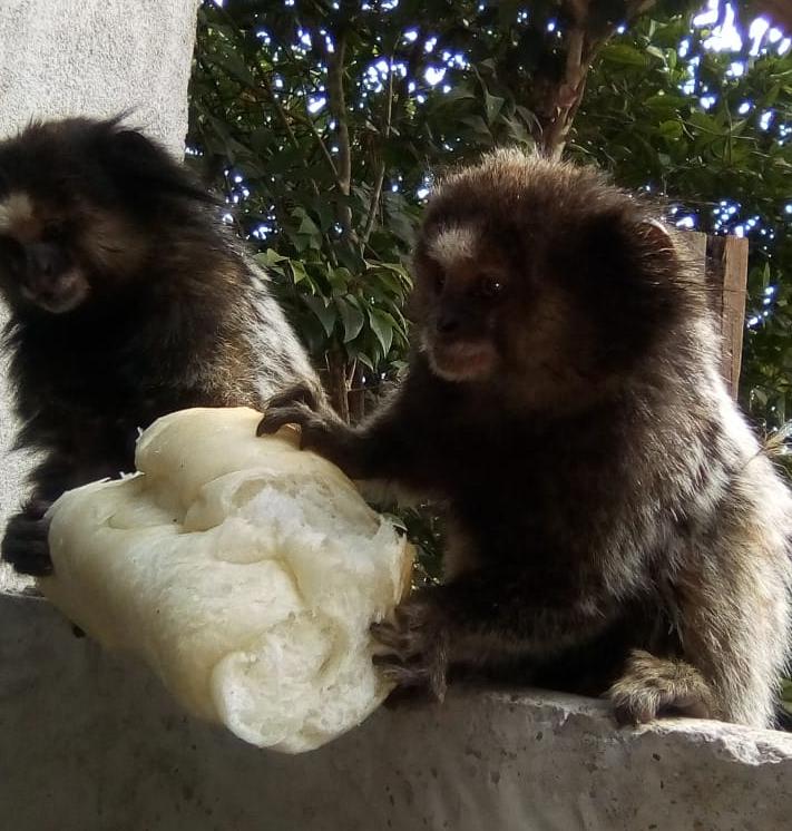 ALTO NÚMERO DE QUEIMADAS PODE SER A CAUSA DA APROXIMAÇÃO DE ANIMAIS SILVESTRES EM ZONA URBANA DE CARANDAÍ